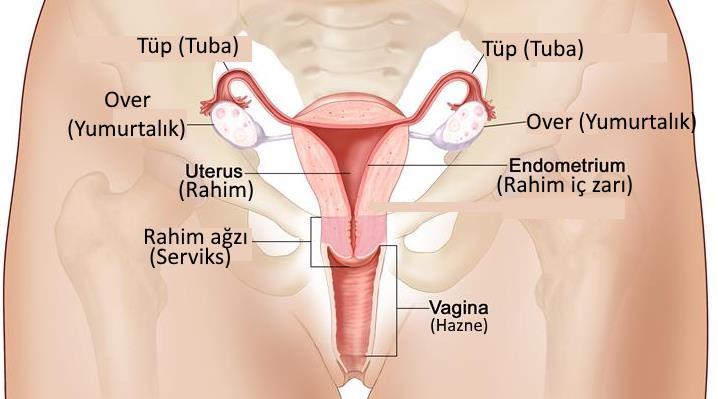 vajina iç dudak estetiği, vajina estetiği, vajina operasyonları