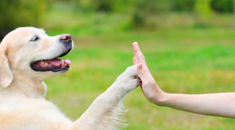 köpek eğitme, köpek nasıl eğitilir, köpek eğitme yolları